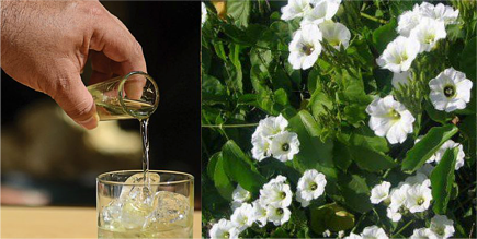 bebida-tipica-merida-cabo-norte